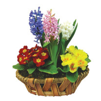 Three hyacinths composition
