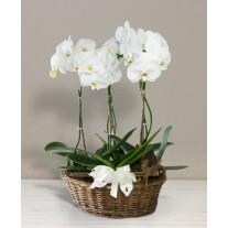Basket with orchids